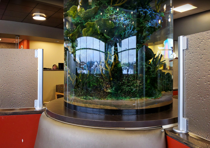 david toillion pediatric dentist fish tank